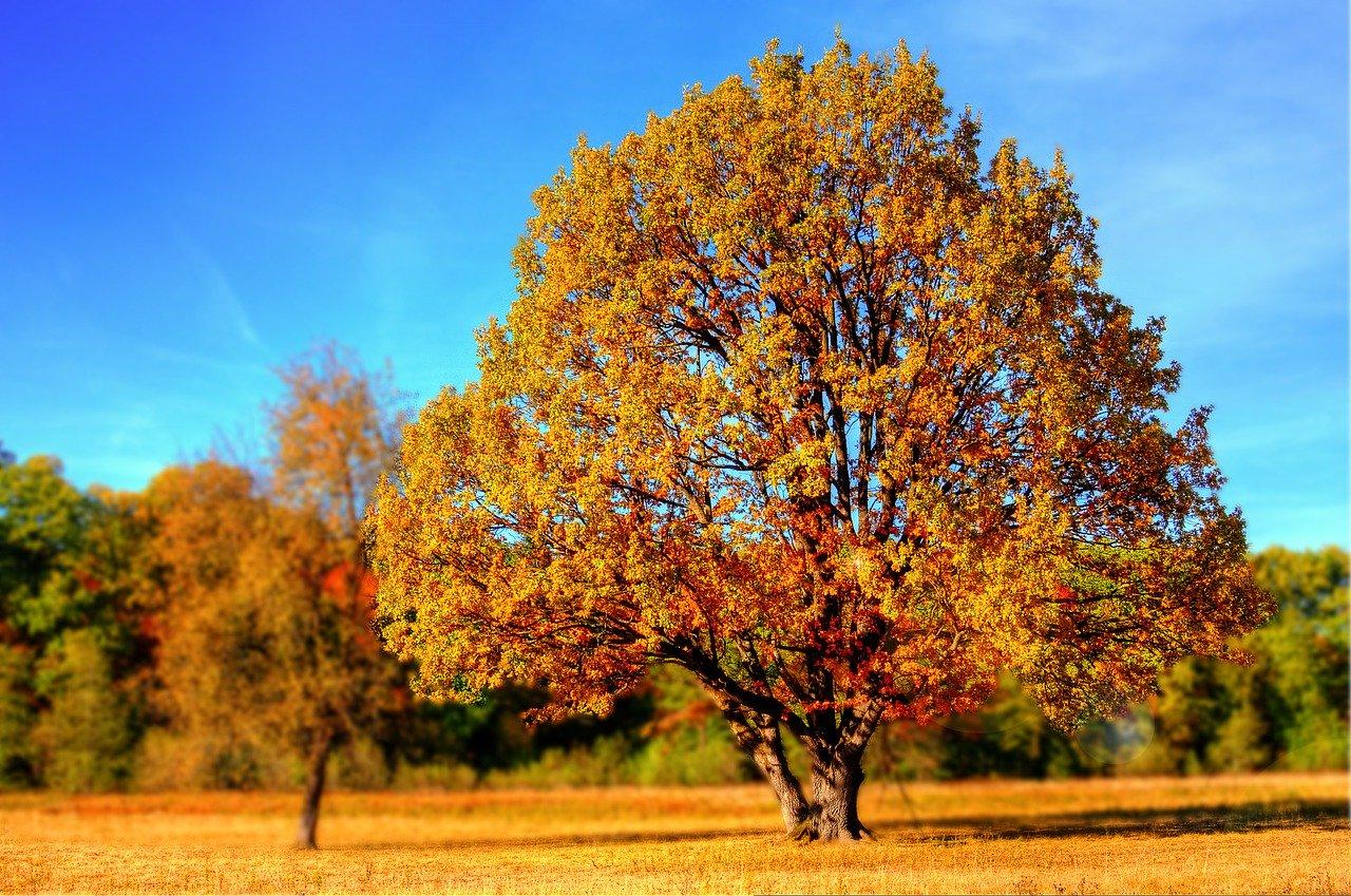 Autumn in the sun