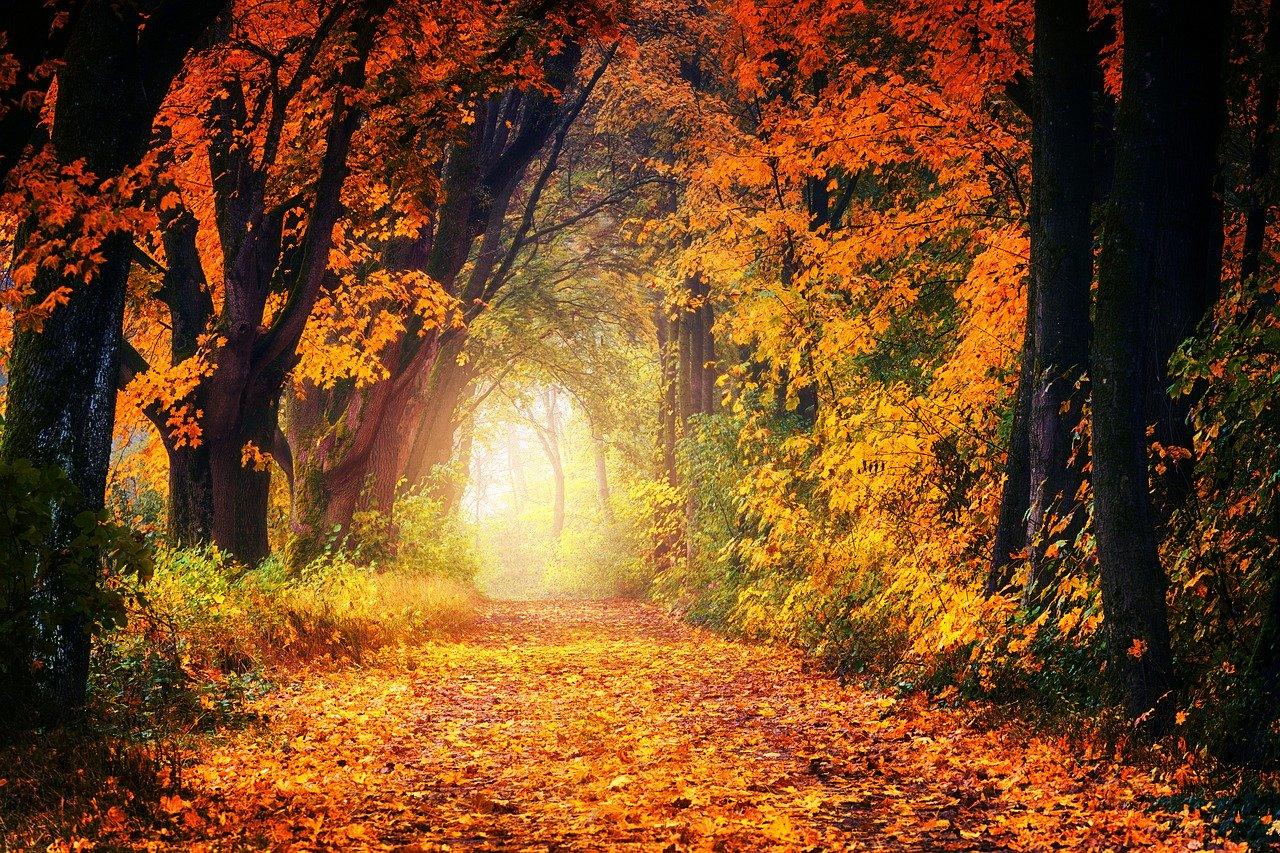 An Autumn reminder