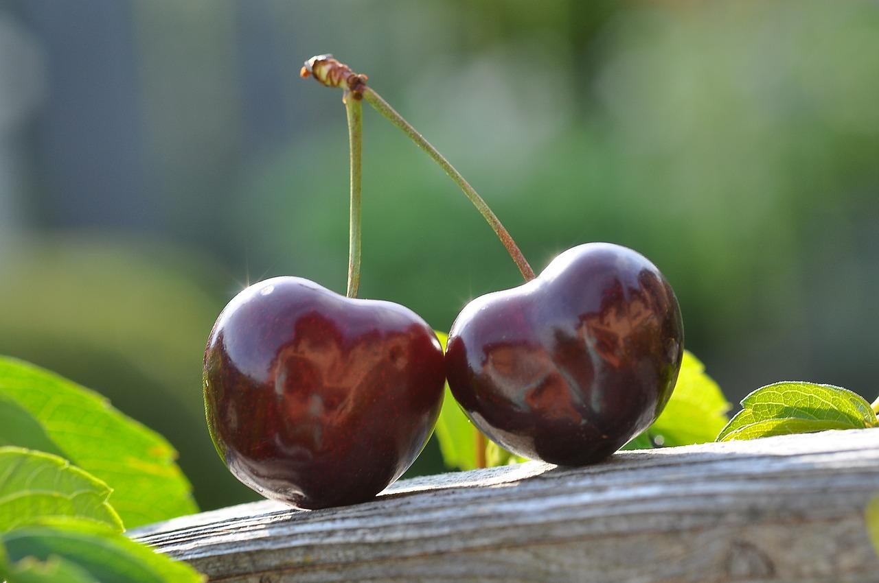 A Corymb of Cherries