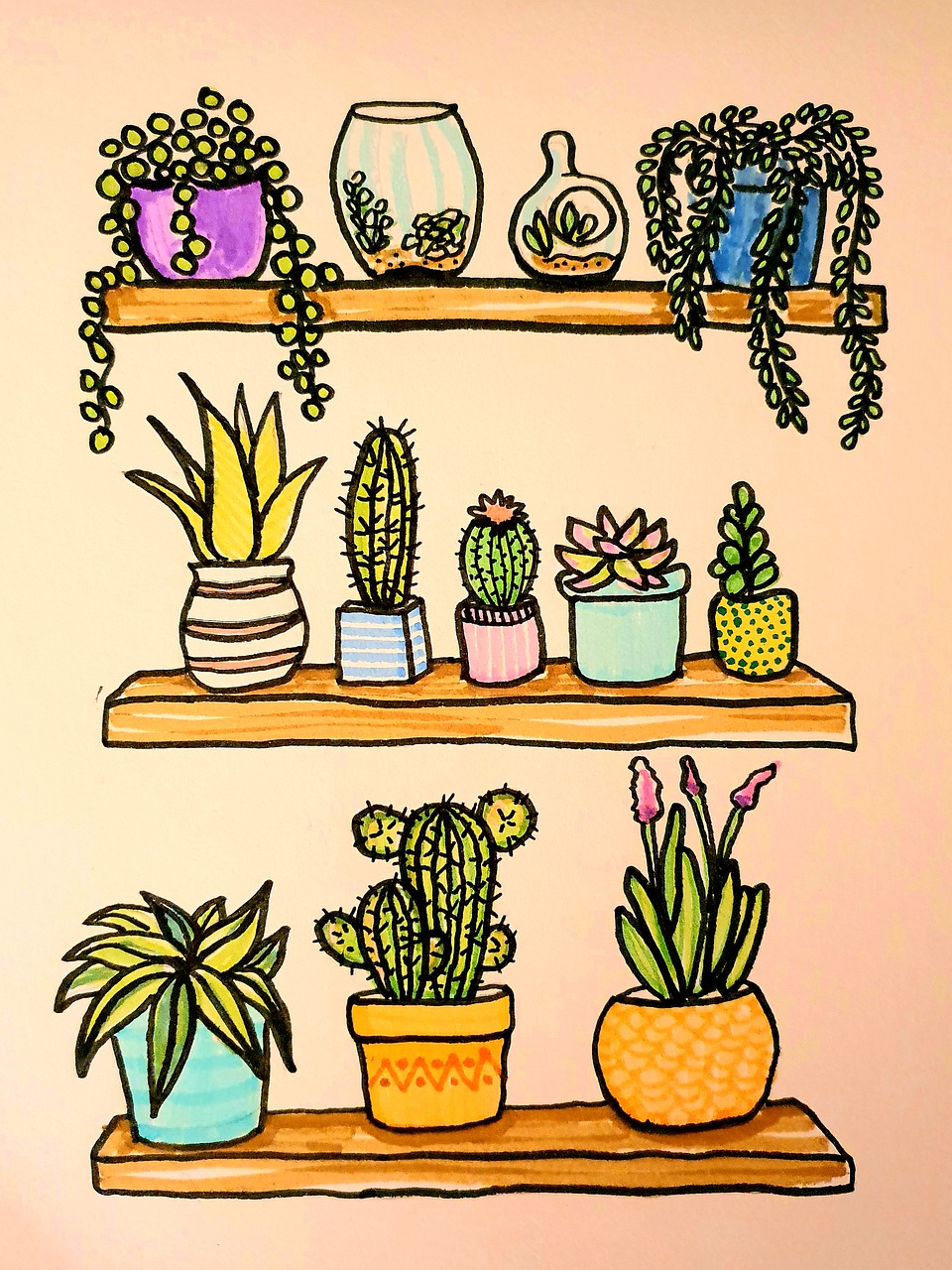 Variety of Houseplants
