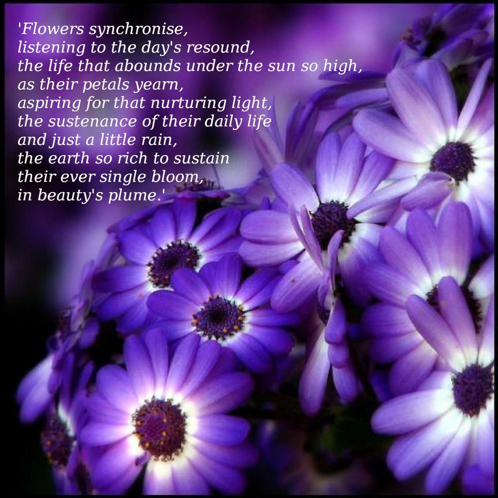 In Beauty's Plume