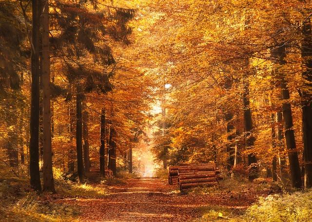 Autumn's Farewell March