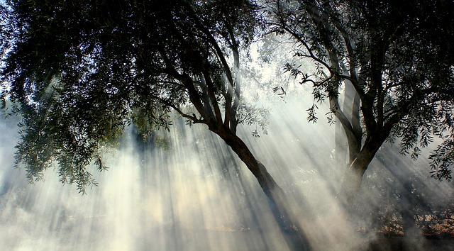Transcendent Dawn