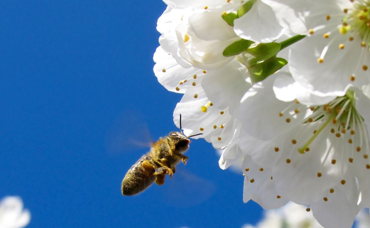 Of Bees and the Sky Acrostic