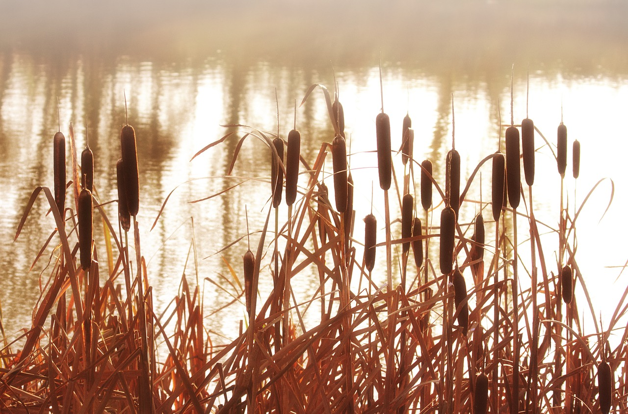 """The Cattail Gatherers at """"Swan Lake"""" Nature Reserve (2019)"""