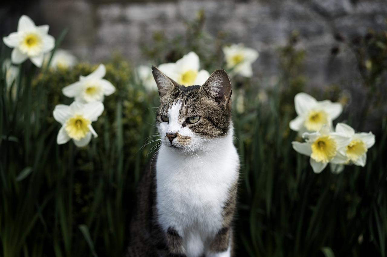 spring breezes