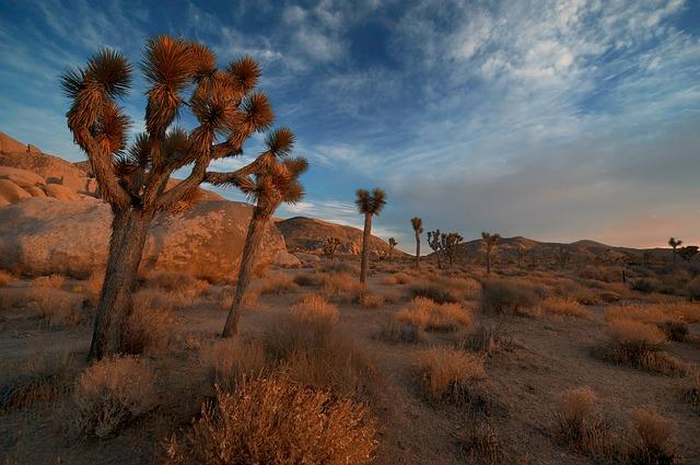 Desertscape…a wonder
