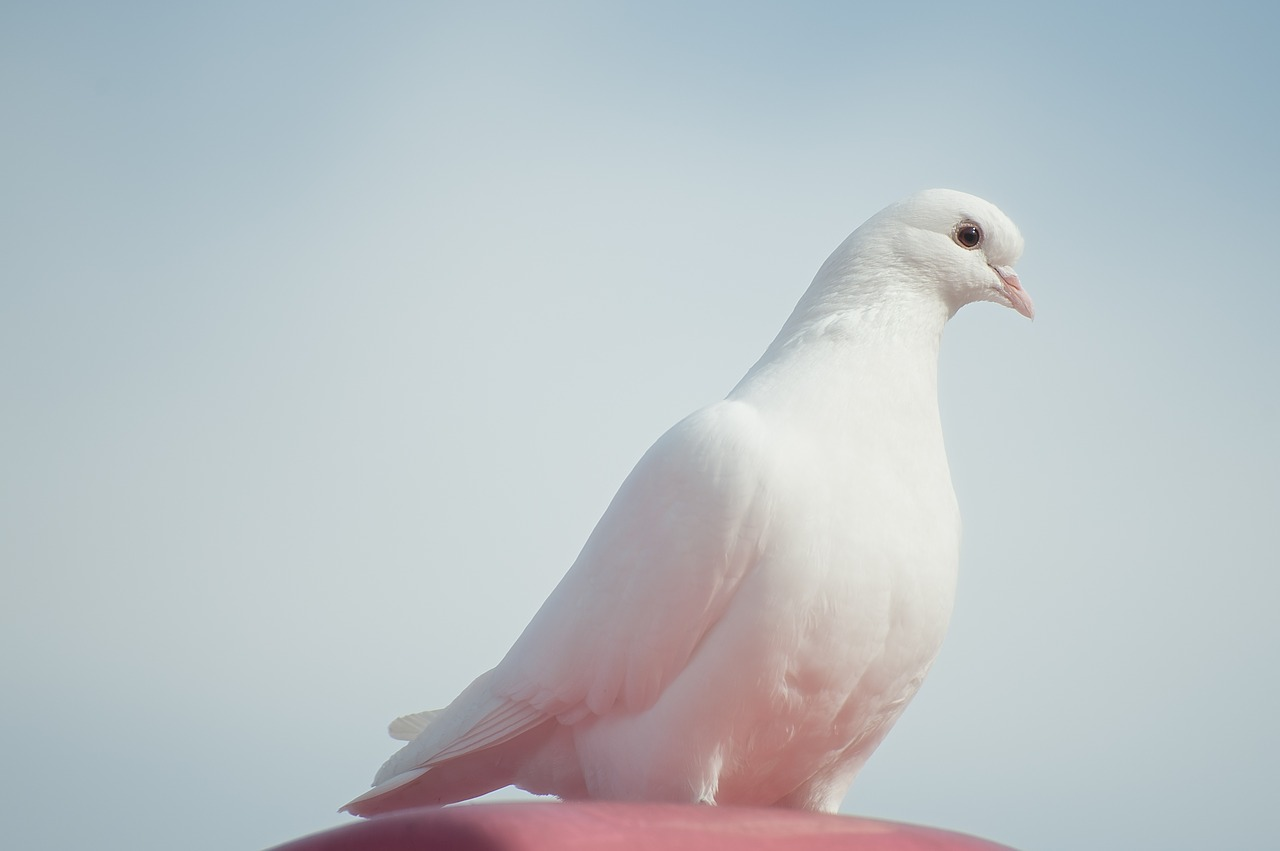 What a Simple Dove Can Teach Us