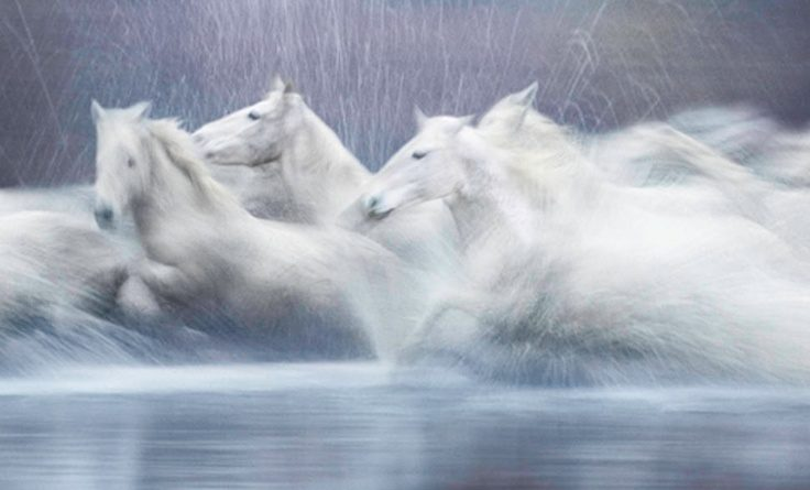 ghostly horses