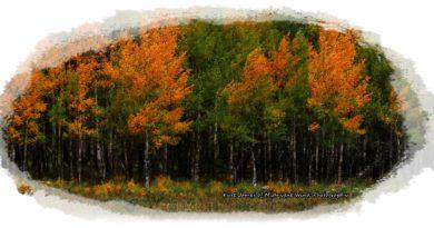 tree whisper