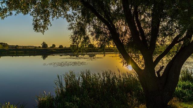 On Pond, Awaken