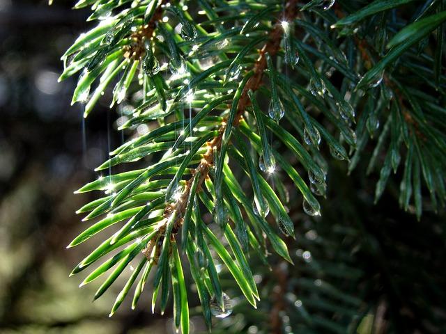 Rain Forest Dawn