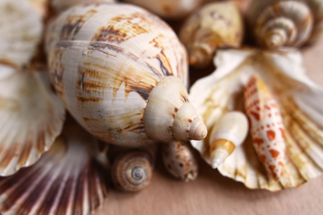 Recycled Seashells