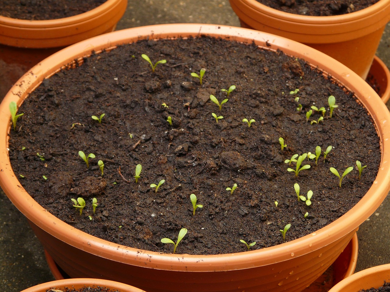 Seedlings From This Years Seed Packets