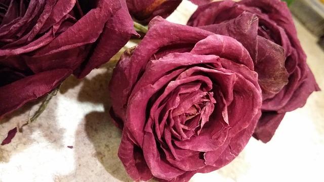 The Fleeting Rose