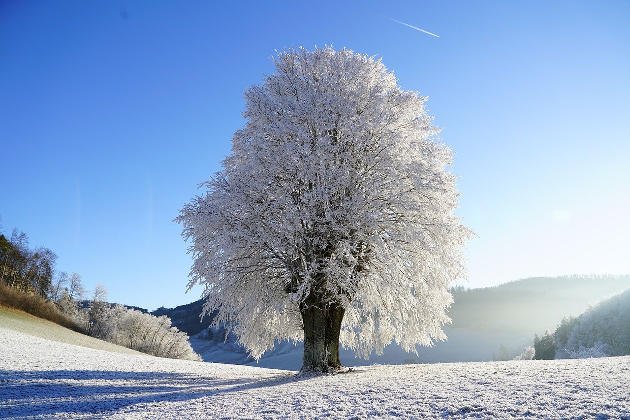 frozen winter world