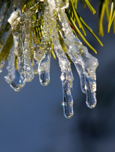 The freeze continued on for weeks.