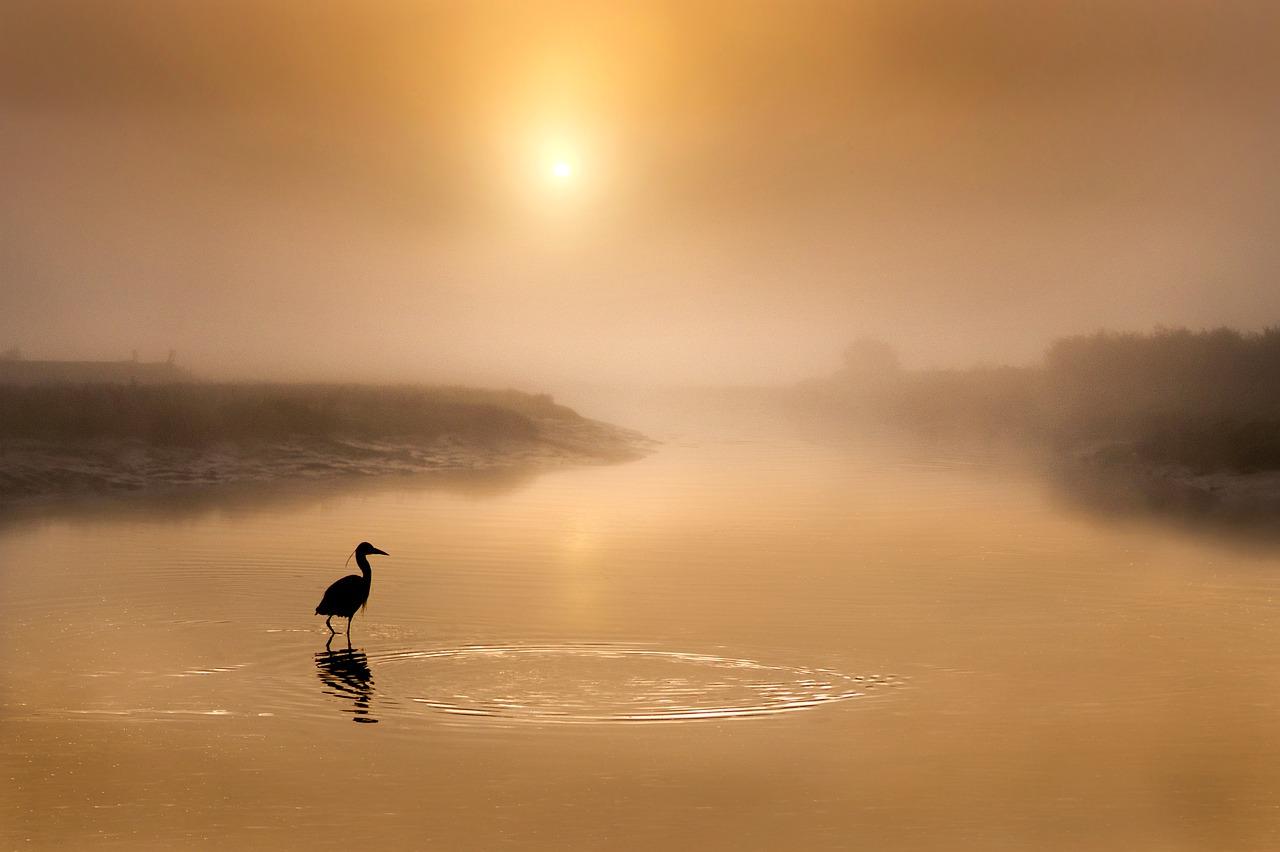 Heron of Swan Lake