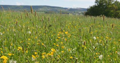 Sunshine Meadow – Haiku