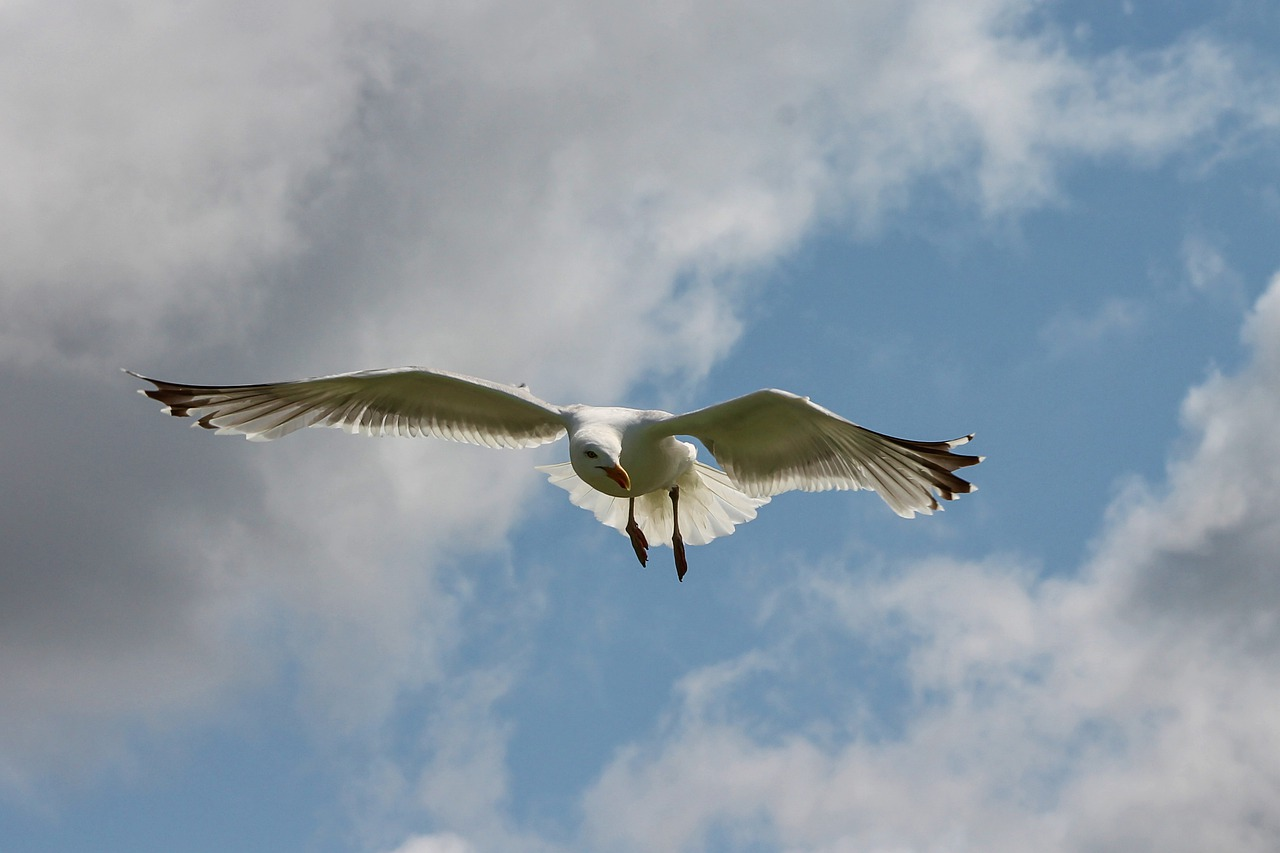 flying through life