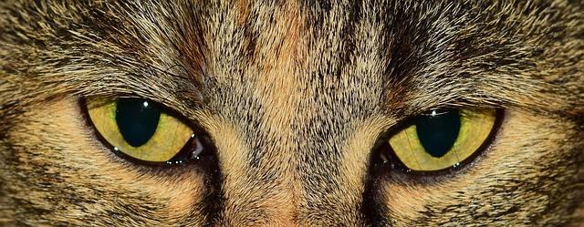 Those Feline Eyes
