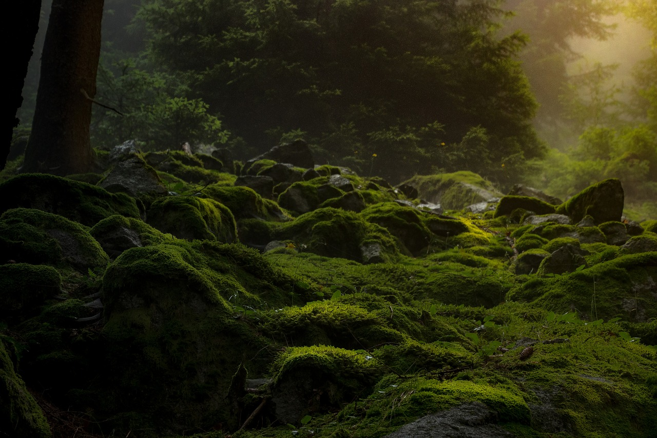 deep primal forest