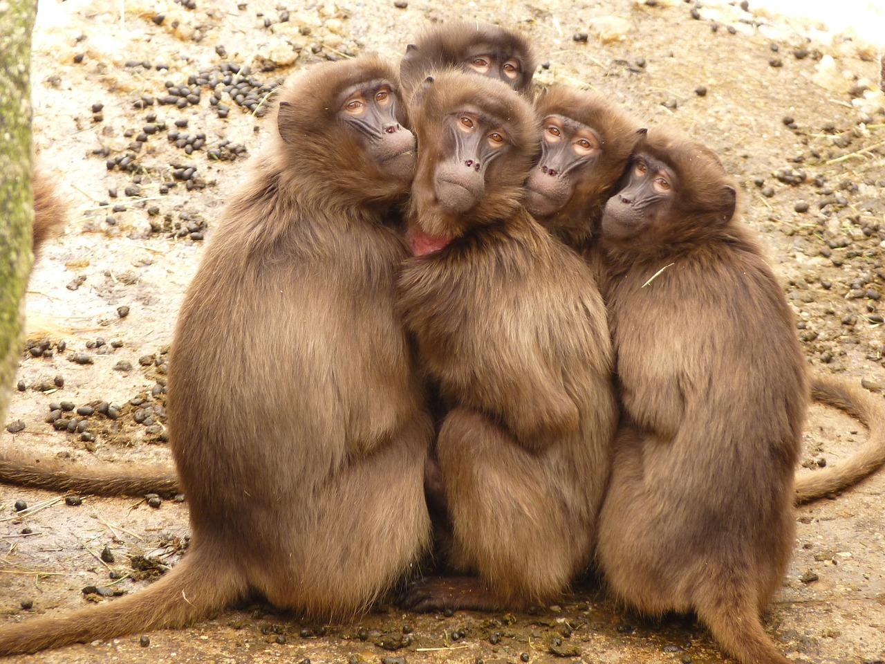 Softly, Softly, Catchy Monkey