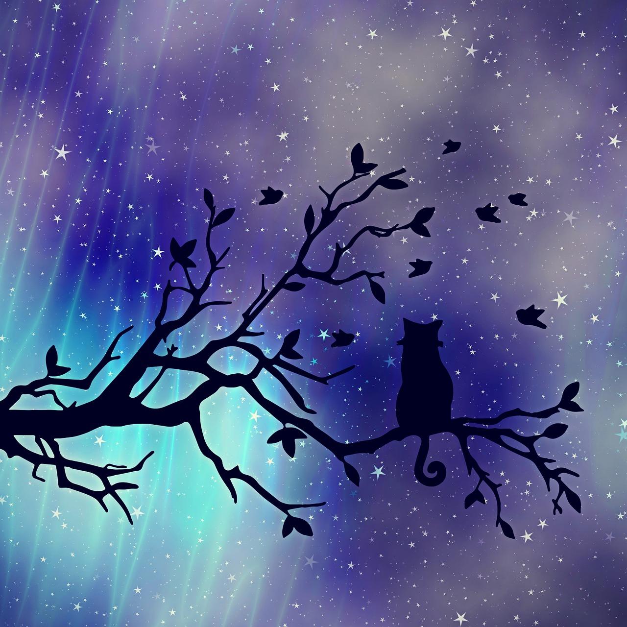 Many Starry Nights